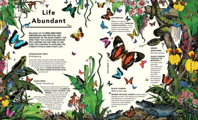 wondergarden_butterflies etc